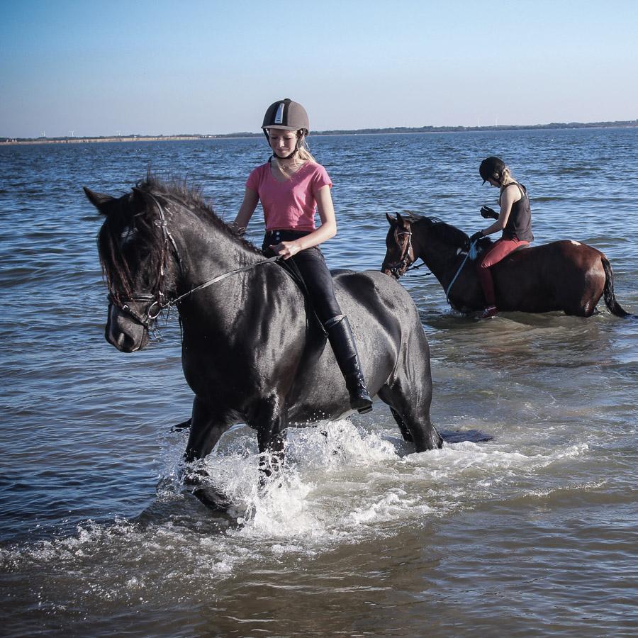 hest på efterskole